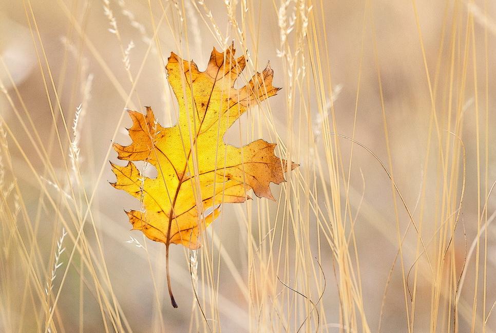 YR29--Follett, Sandy, Autumn Leaf.jpg