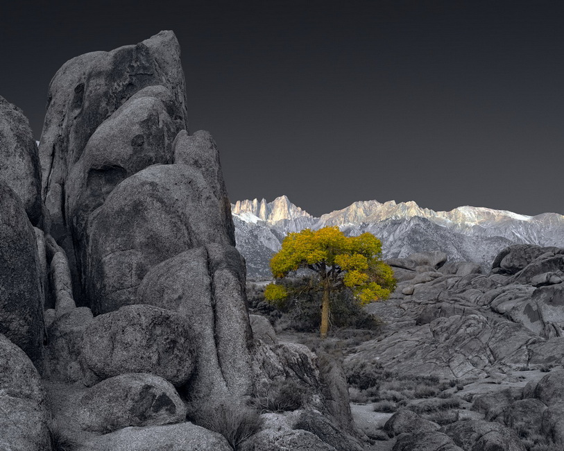 YR29--Hertz, Tony, Sunrise and Lone Tree....jpg