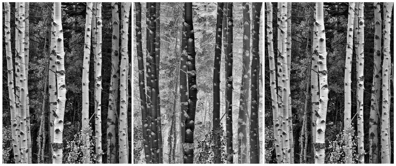YR29--Hertz, Tony, Trees in Exchange.jpg