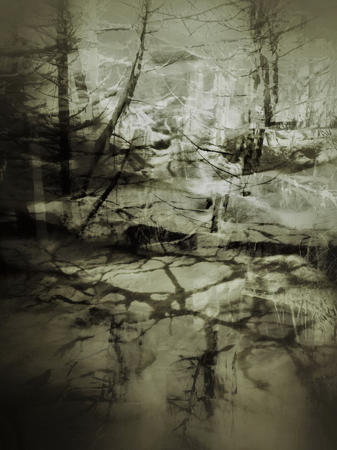 YR29--Nelson, Glenn, Forest.jpg