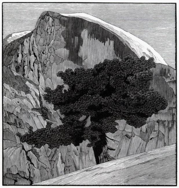 YR28--Wagener, Richard, North Dome Tree.jpg