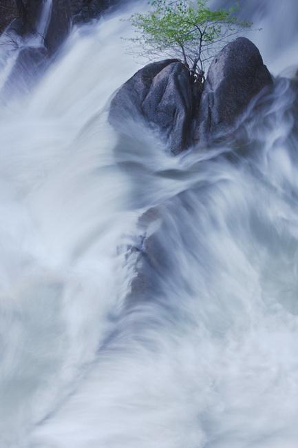 YR 27--Neill William, Rock Water and Tree, Cascade Falls,Yosemite.jpg