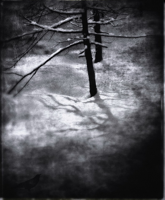 YR 27--Nelson, Glenn, Winter Trees, Yosemite.jpg