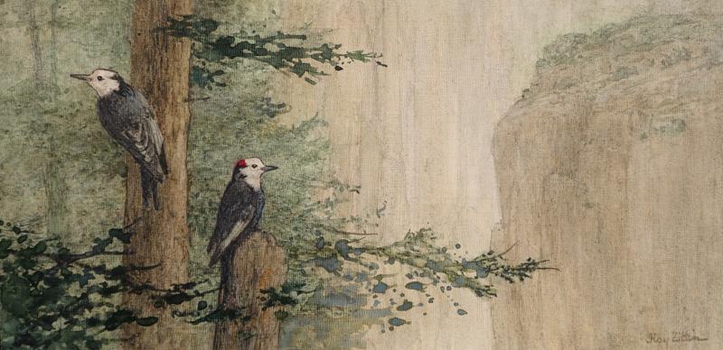 <b><i>White Headed Woodpeckers,</b></i> Floy Zittin