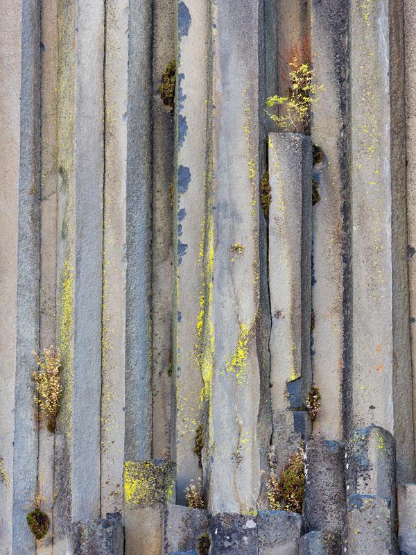 Second Place $200, Basalt Columns, Lichen, Autumn Plants, G Dan Mitchell