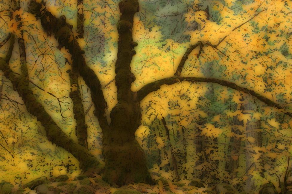 YR 25--Dayton, Robert, Moss Covered Tree, Fall.jpg