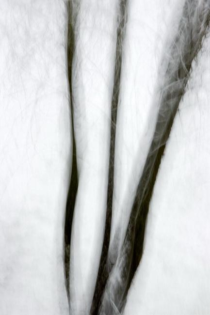 YR 25--Neill, William, Willow in Snowstorm, Sierra Neveda.jpg