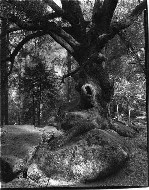 YR 24--Fitzgerald, Jim, Eye of the Oak.jpg