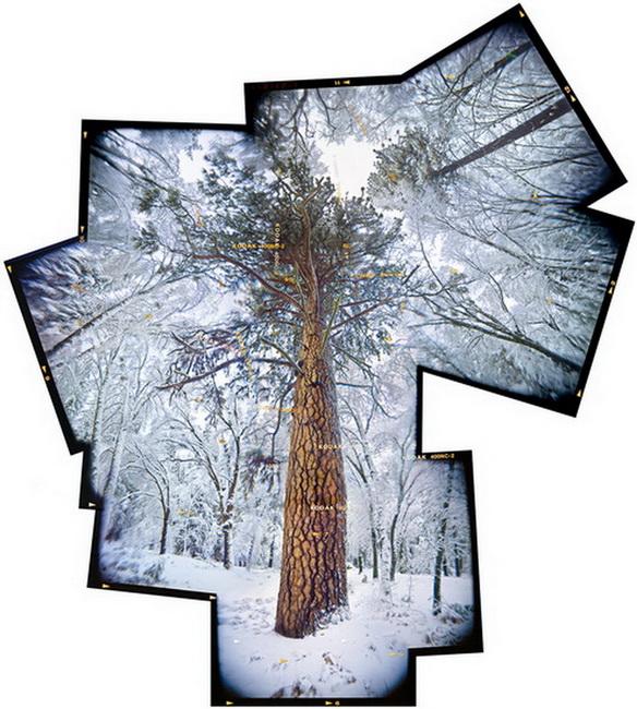 YR 24--Orland, Ted, Tree Snowstorm.jpg