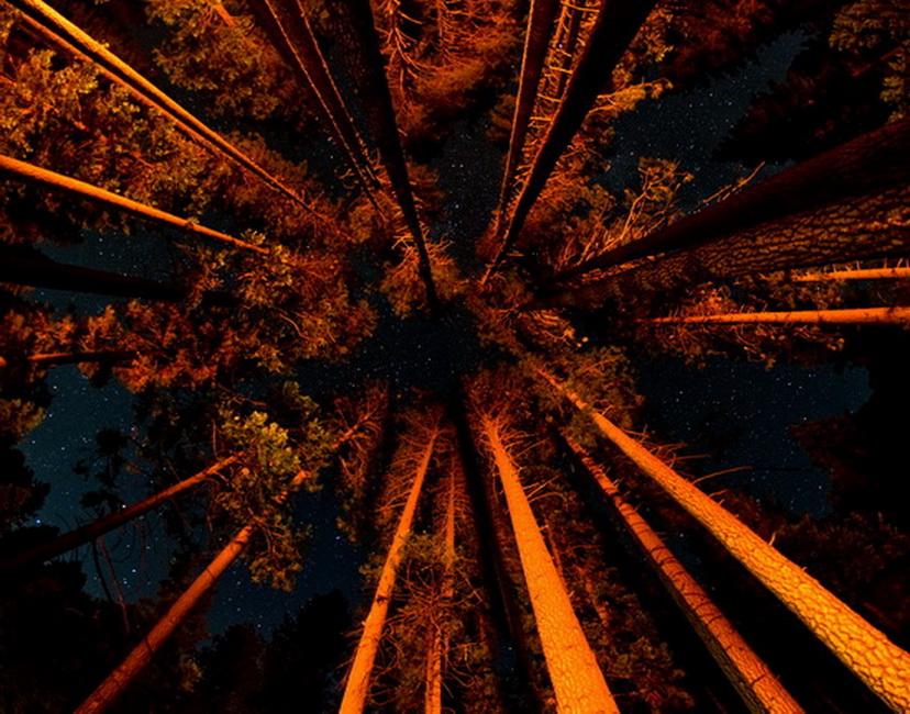 YR 24--Theilen, Matt, Upper Pines Campfire Light.jpg