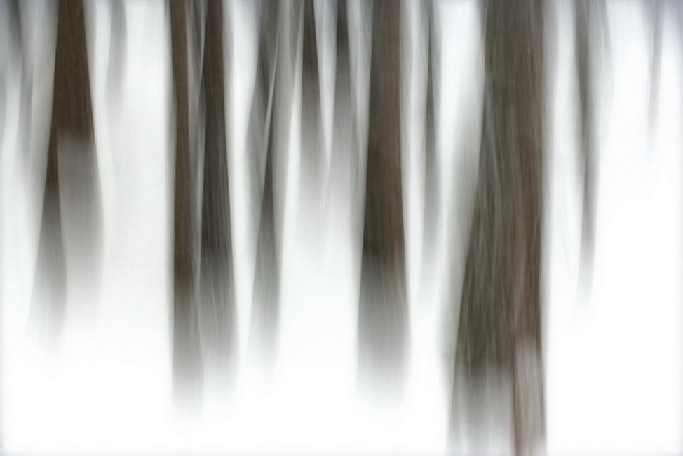 YR 23--Neill, William, Winter Forest, Yosemite National Park, California  2007.jpg