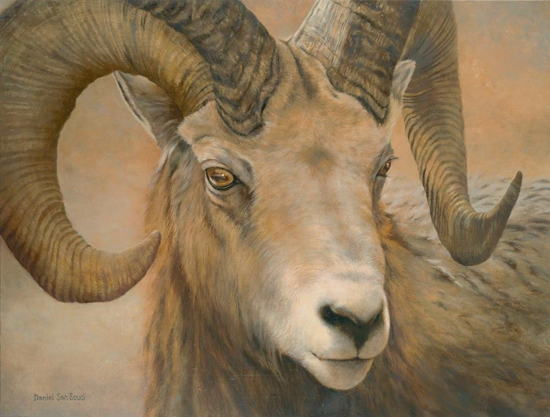 Big Horn, Daniel San Souci
