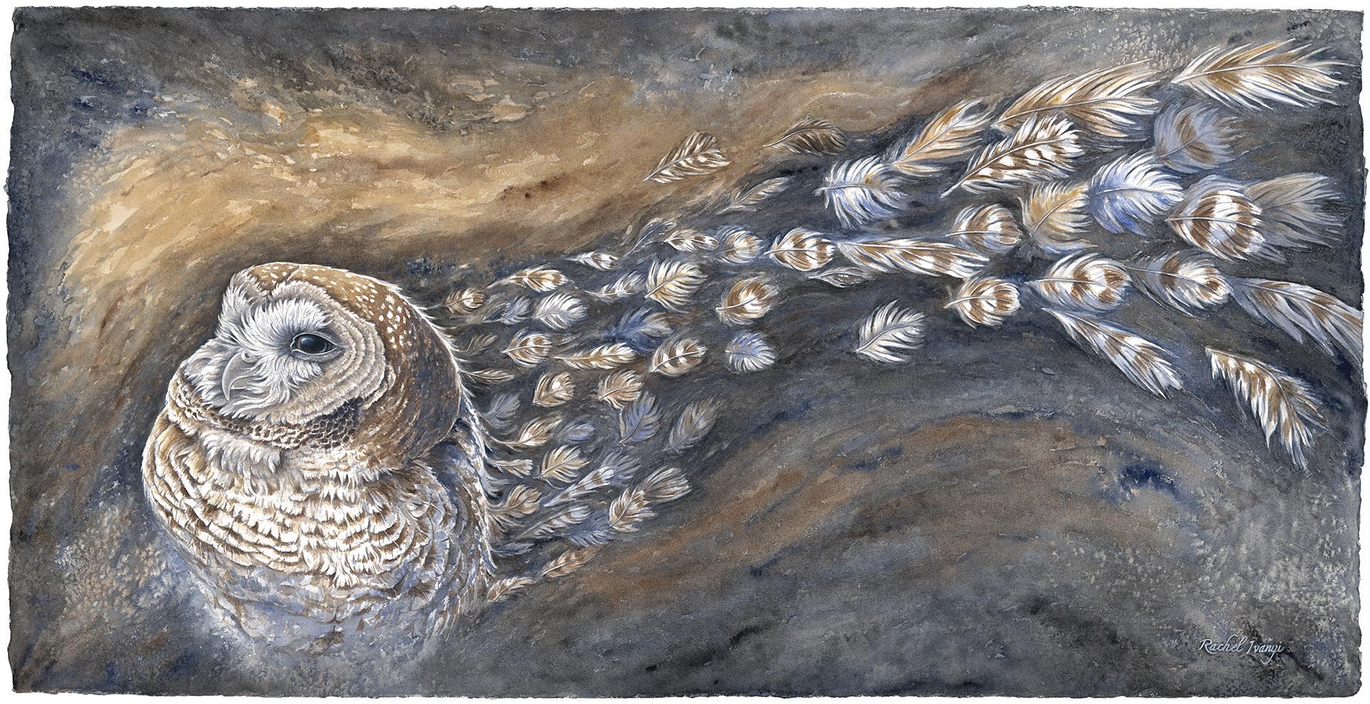 Permanence? California Spotted Owl, Rachel Ivanyi