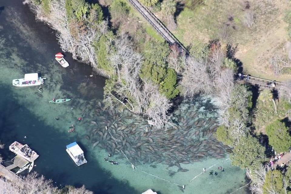 Swim & Snorkel with Manatee — Crystal River & Homosassa