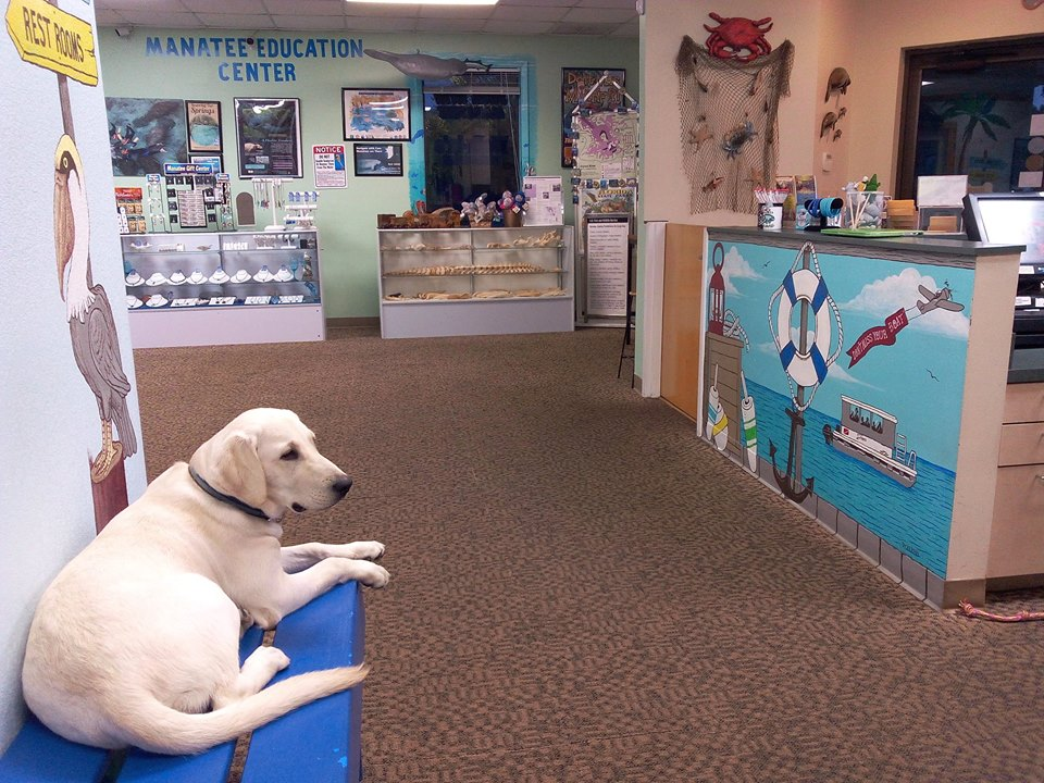 River Ventures Manatee Shop