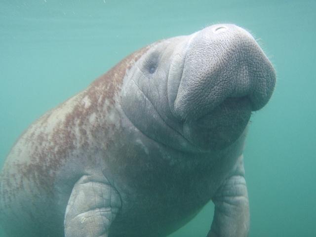 Credit: U.S. Fish and Wildlife Endangered Animals/Flickr.