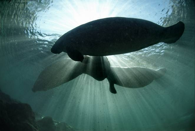 CC BY 2.0 David Hinkel/USFWS Endangered Species