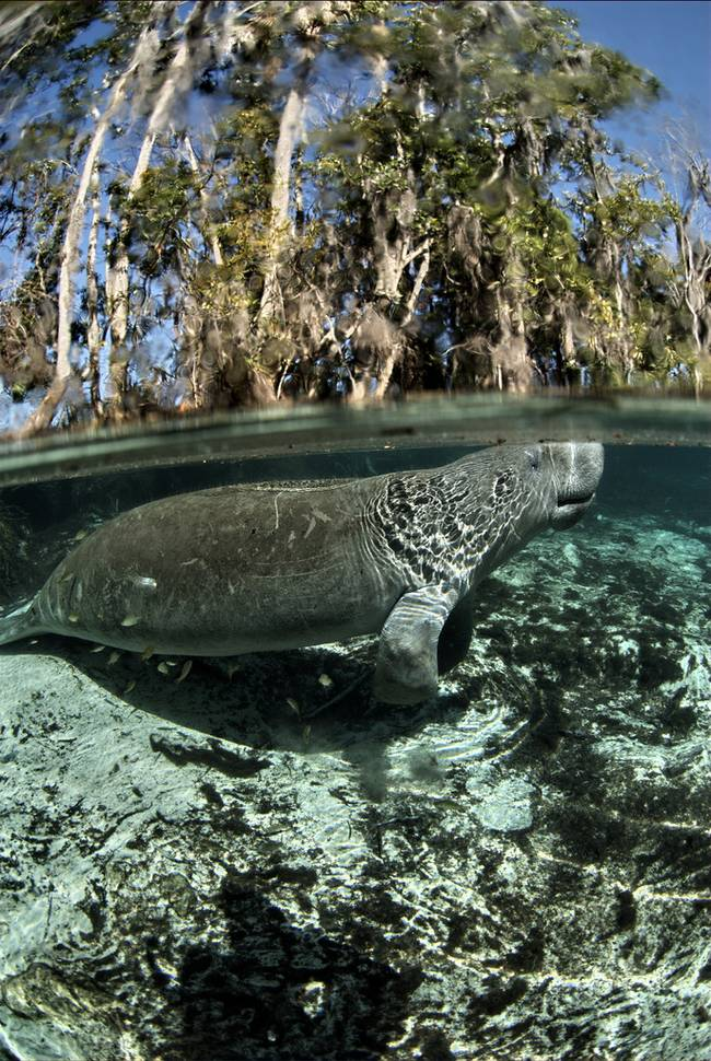 David Hinkel/USFWS Endangered Species/CC BY 2.0