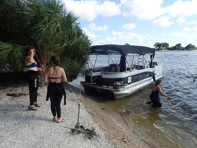 Our Family Fun Day Tour yesterday was able to fit in a manatee snorkel, a paddle and a trip to shell island for a salt water snorkel. This tour is so underrated and priced right! https://riverventures.rezdy.com/…/manatees-and-more-family-…