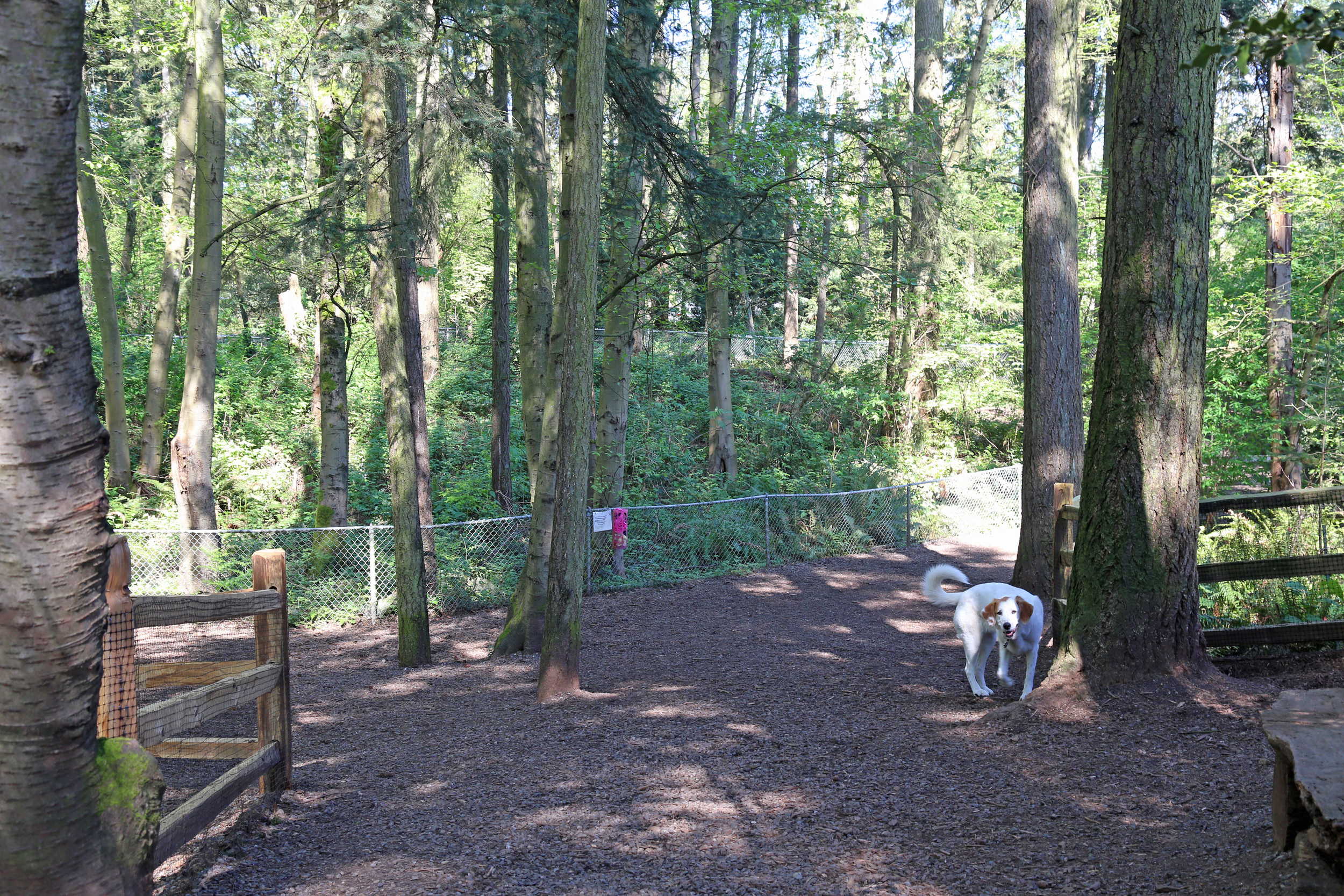 North Acres dog park is full of trees and trails.