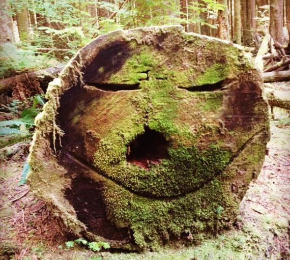 The tree face at Wallace Falls.