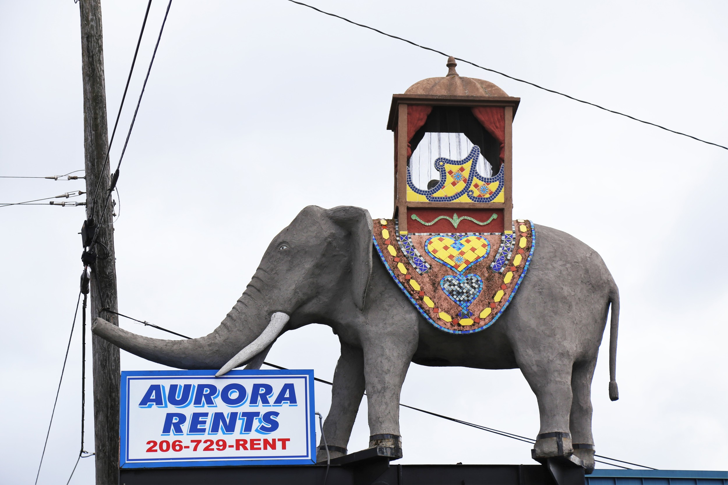 The crazy Aurora elephant