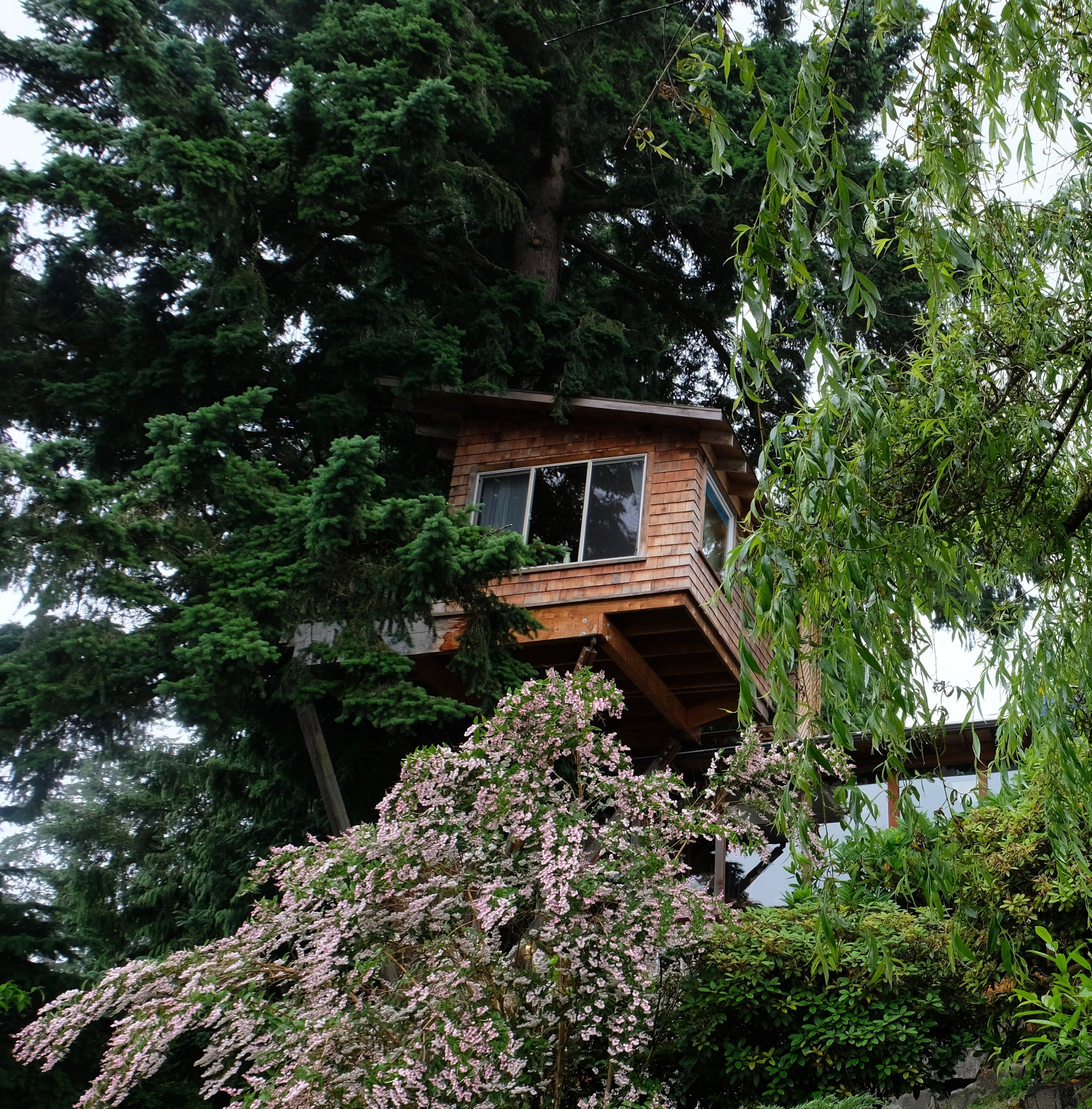 It's epic. It's an epic treehouse.