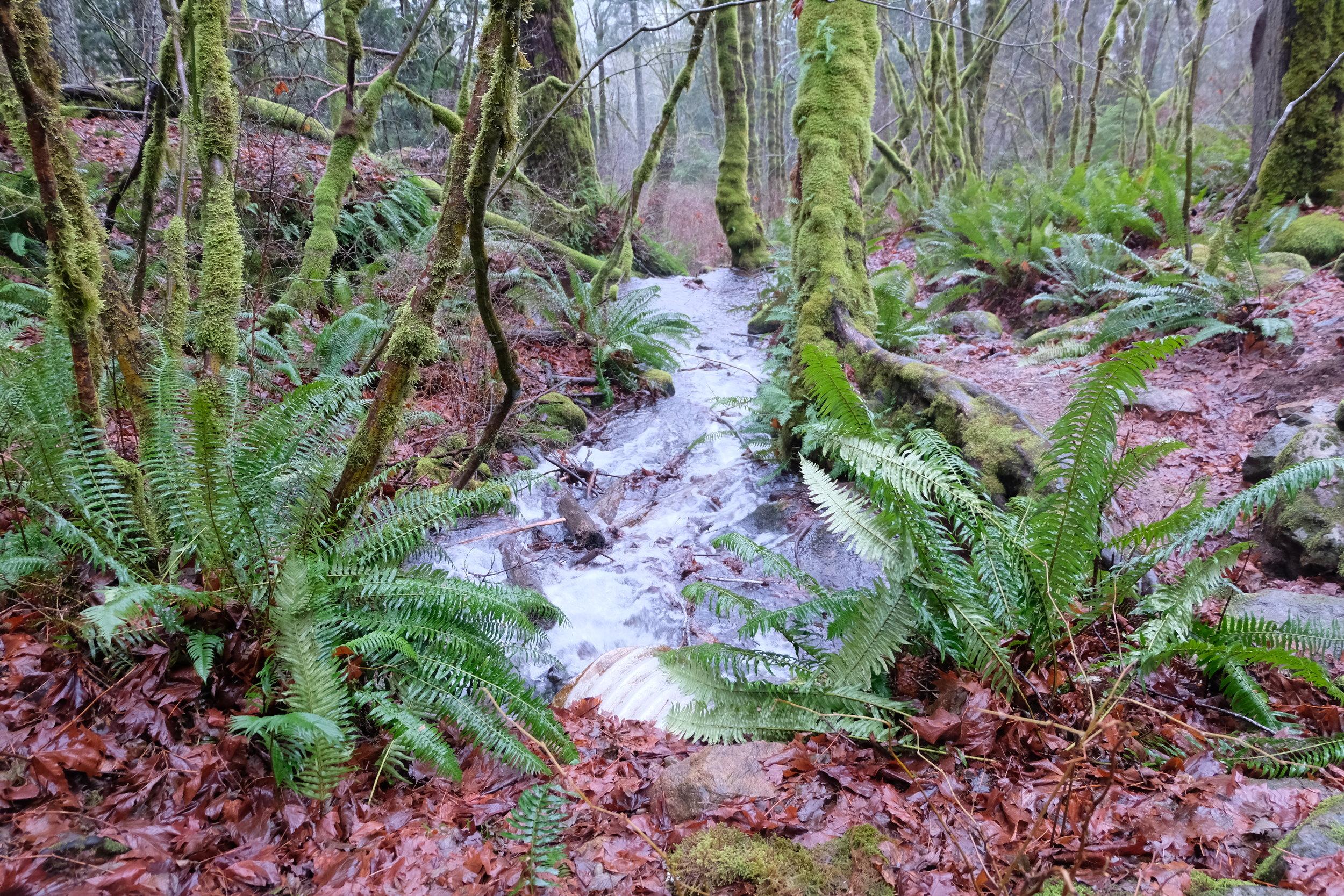 Little Si creek