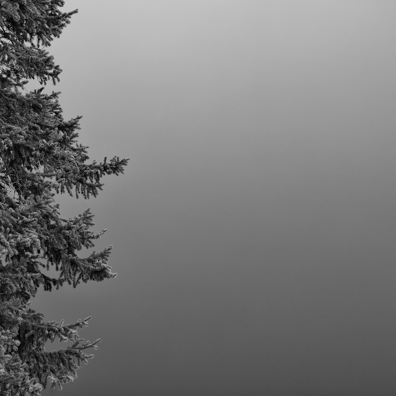 Bodhi [2011] Jasper NP, AB, Canada