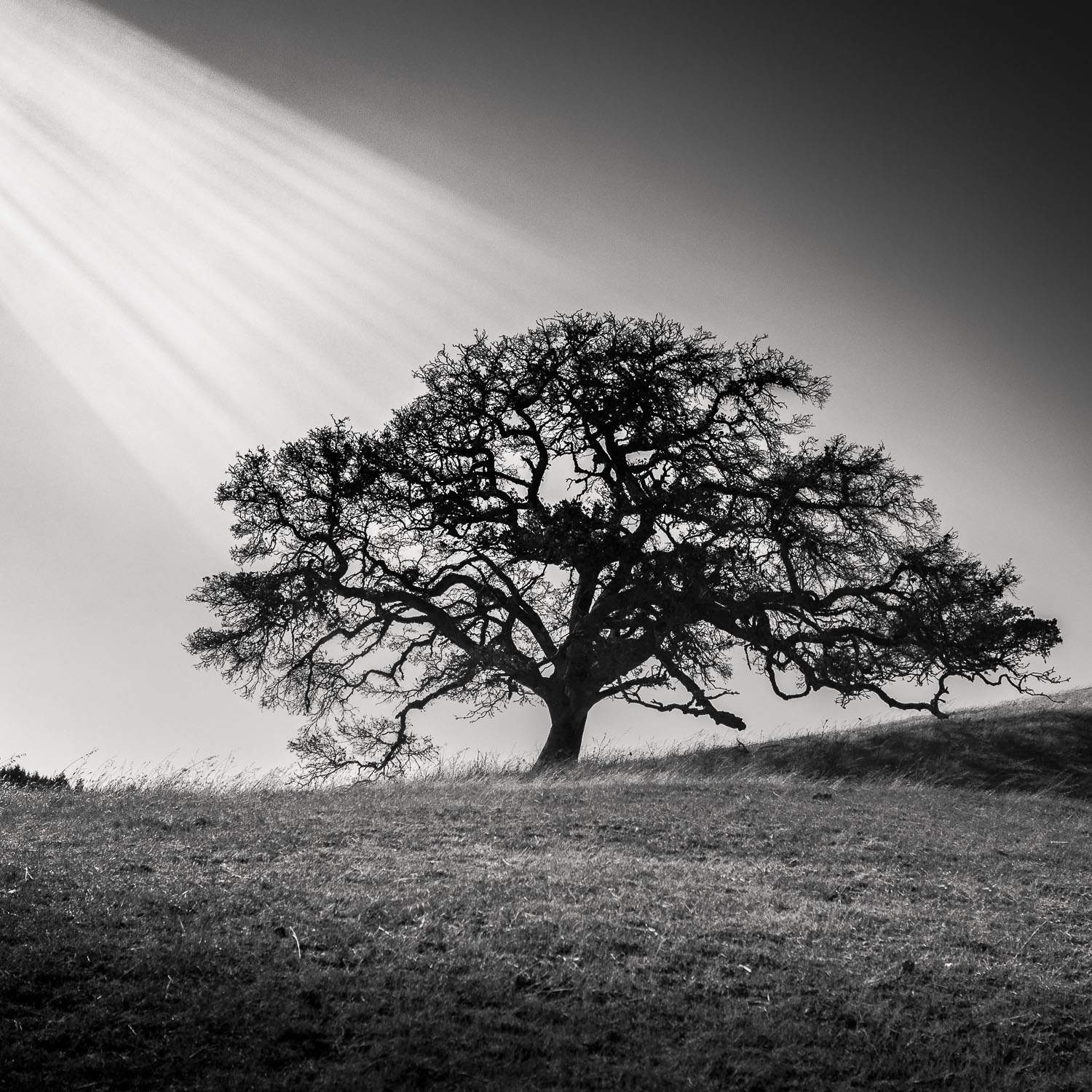 Immerse [2013] Marin County, CA, USA