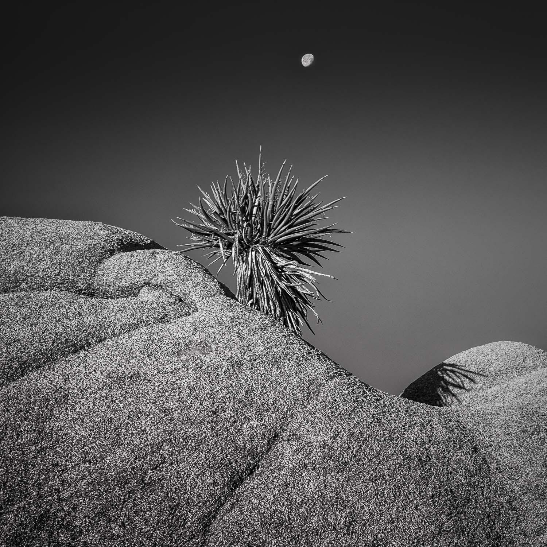 Moon Shadow [2011] Joshua Tree, CA, USA