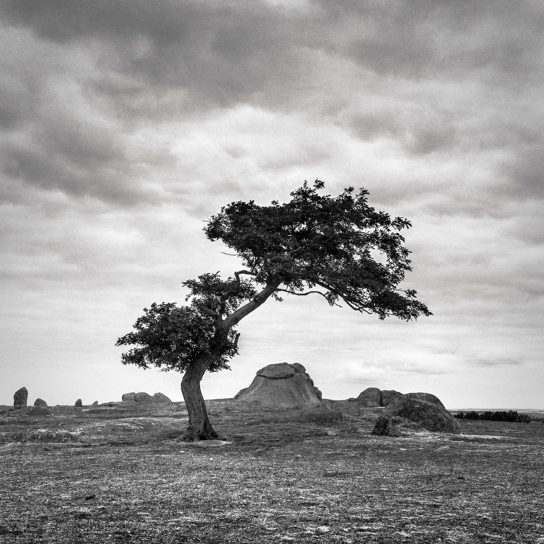 Hangin' Tree [2016] Dog Rocks, Vic, Australia