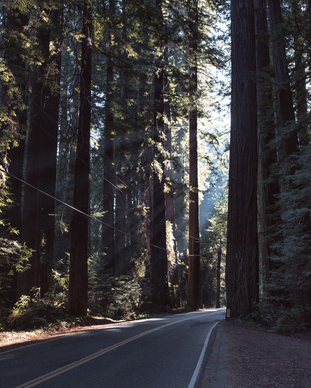 07_Redwoods_Redcrest.jpg
