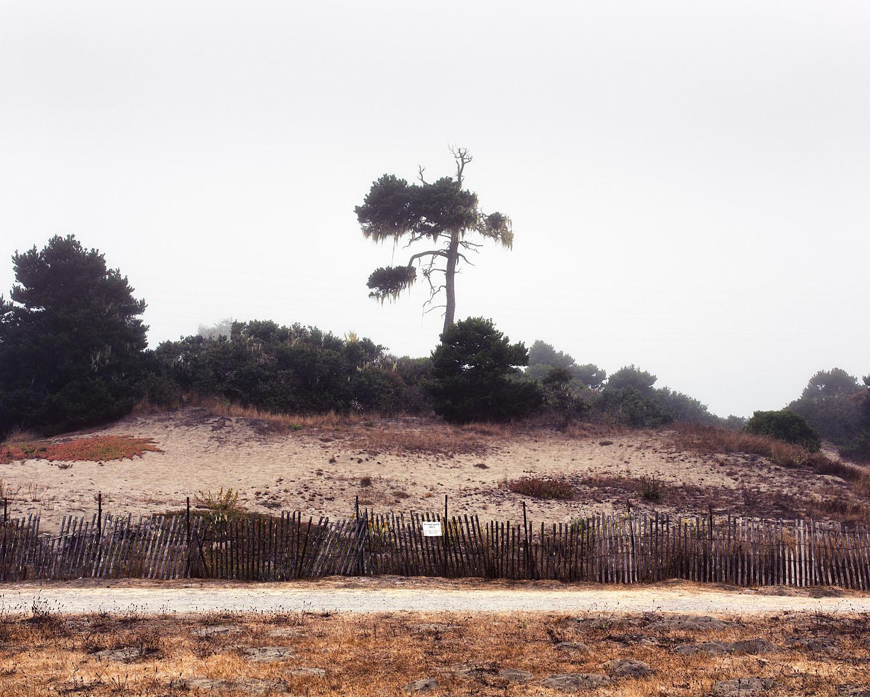 18_Tree_Eureka.jpg