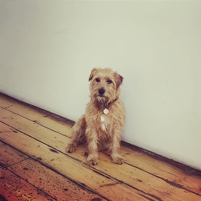 We had a 'model' visit us today, fresh from his appearance on the @blackhorsemills shoot. #ted