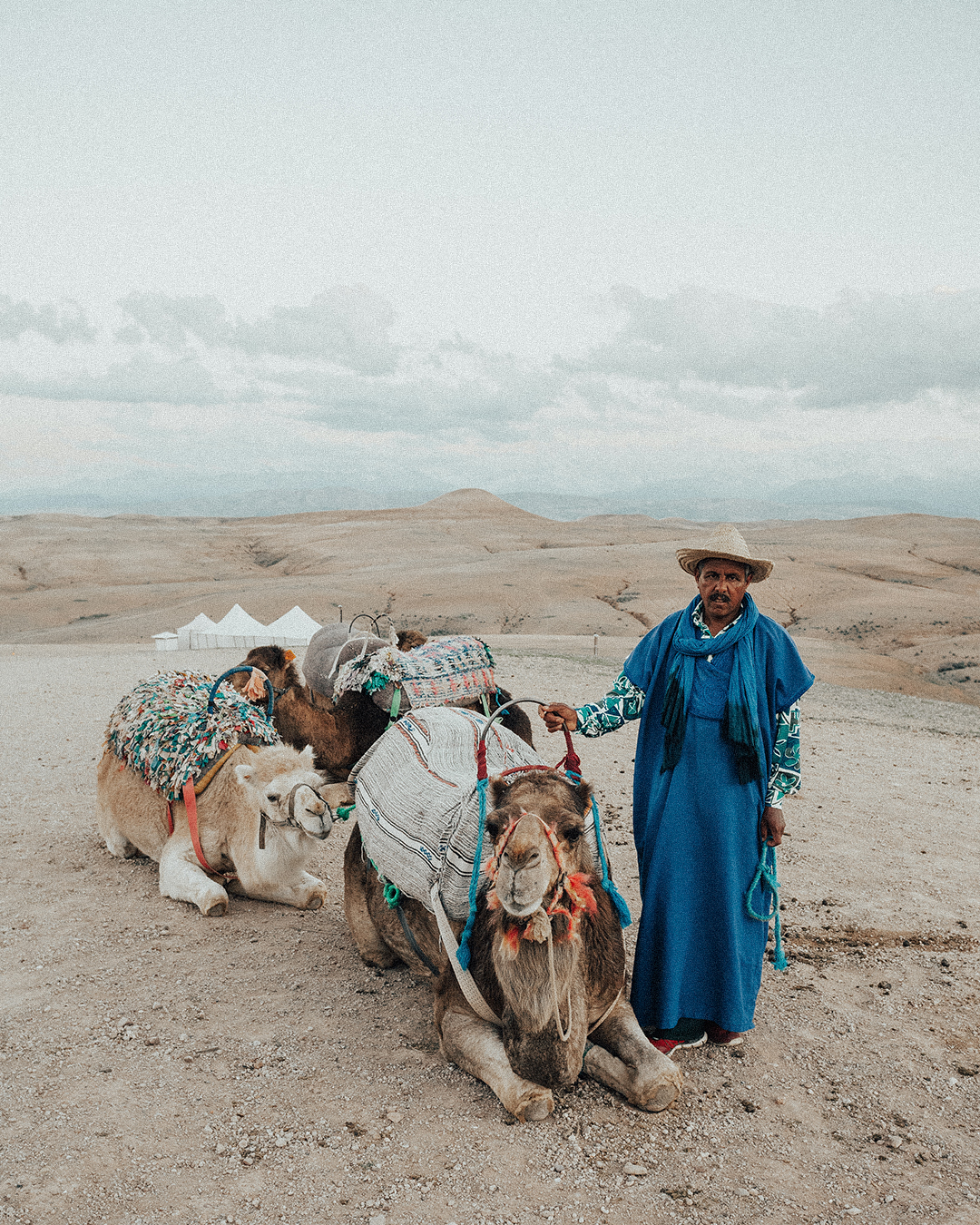 Camel_IG.jpg