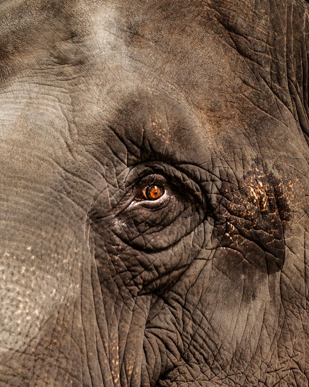 Akyra_ElephantEye_IG.JPG