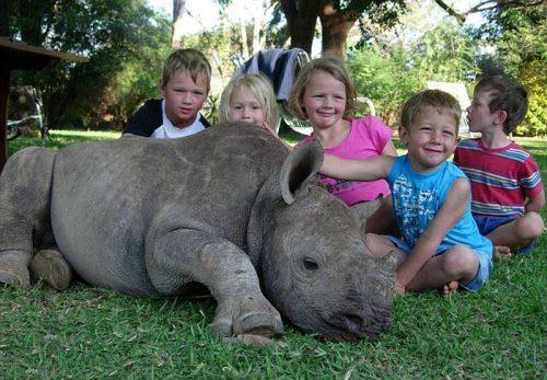 pet-rhino-1.jpg