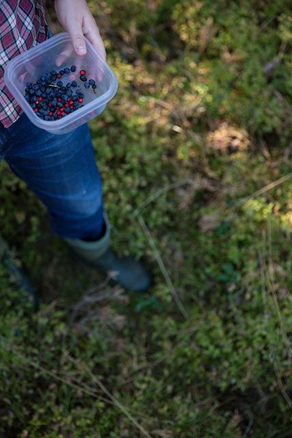 Jag har plockat blåbär.