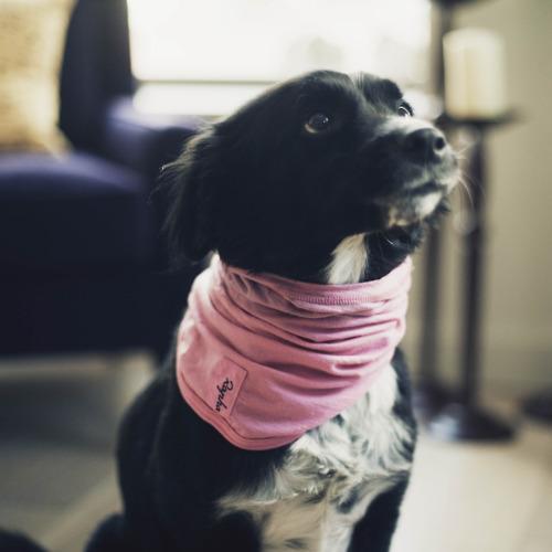 Photo from mattsbikeblog.co.uk, though it looks like Kona, the resident dog at the creakybottombracket household.