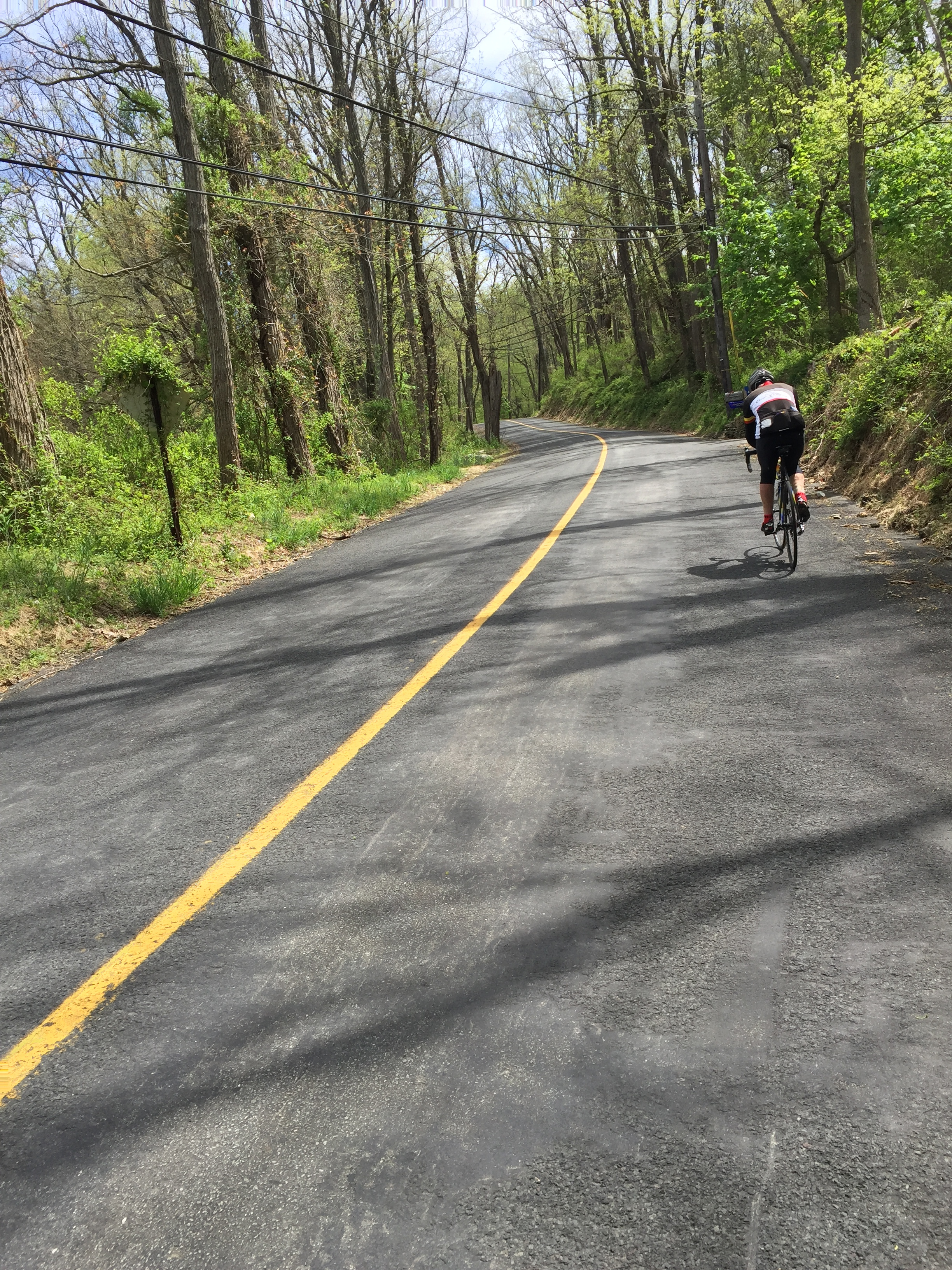 We caught this lone rider at the bottom of Adamic Hill Road only to have him pass us near the top.