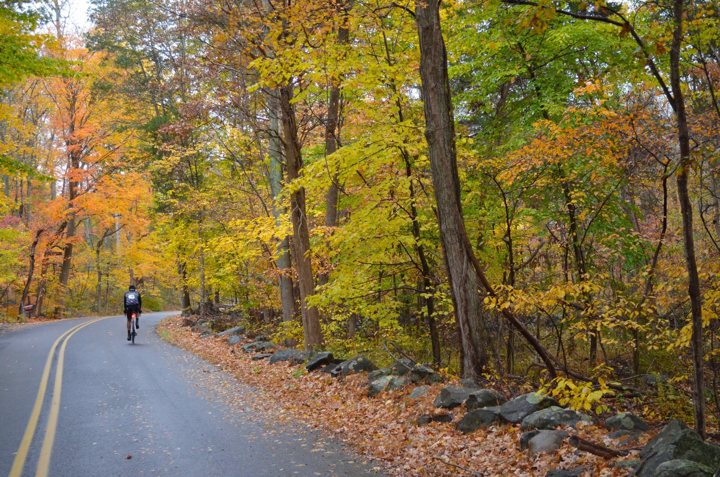 An example of the fall colors during last year's Oktoberfest ride by Kermesse Sport. Photo credit Janine Carroll.