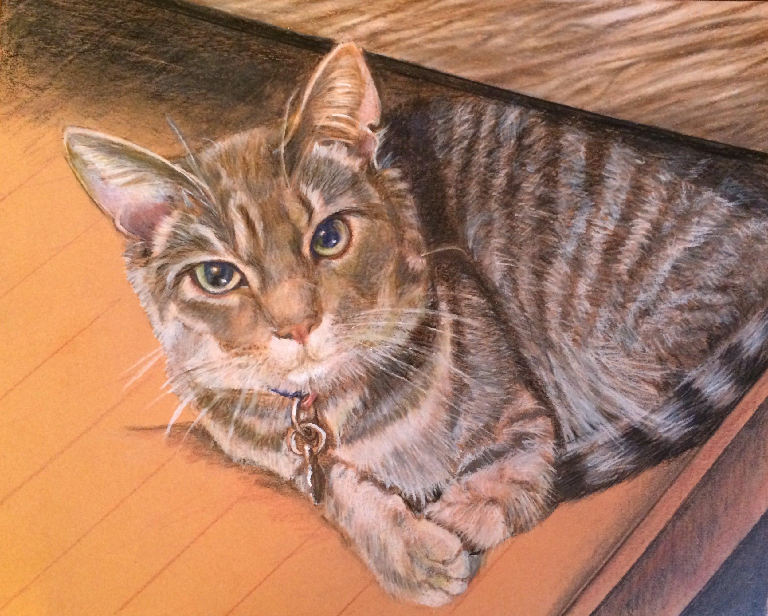 cat in a drawer.jpg