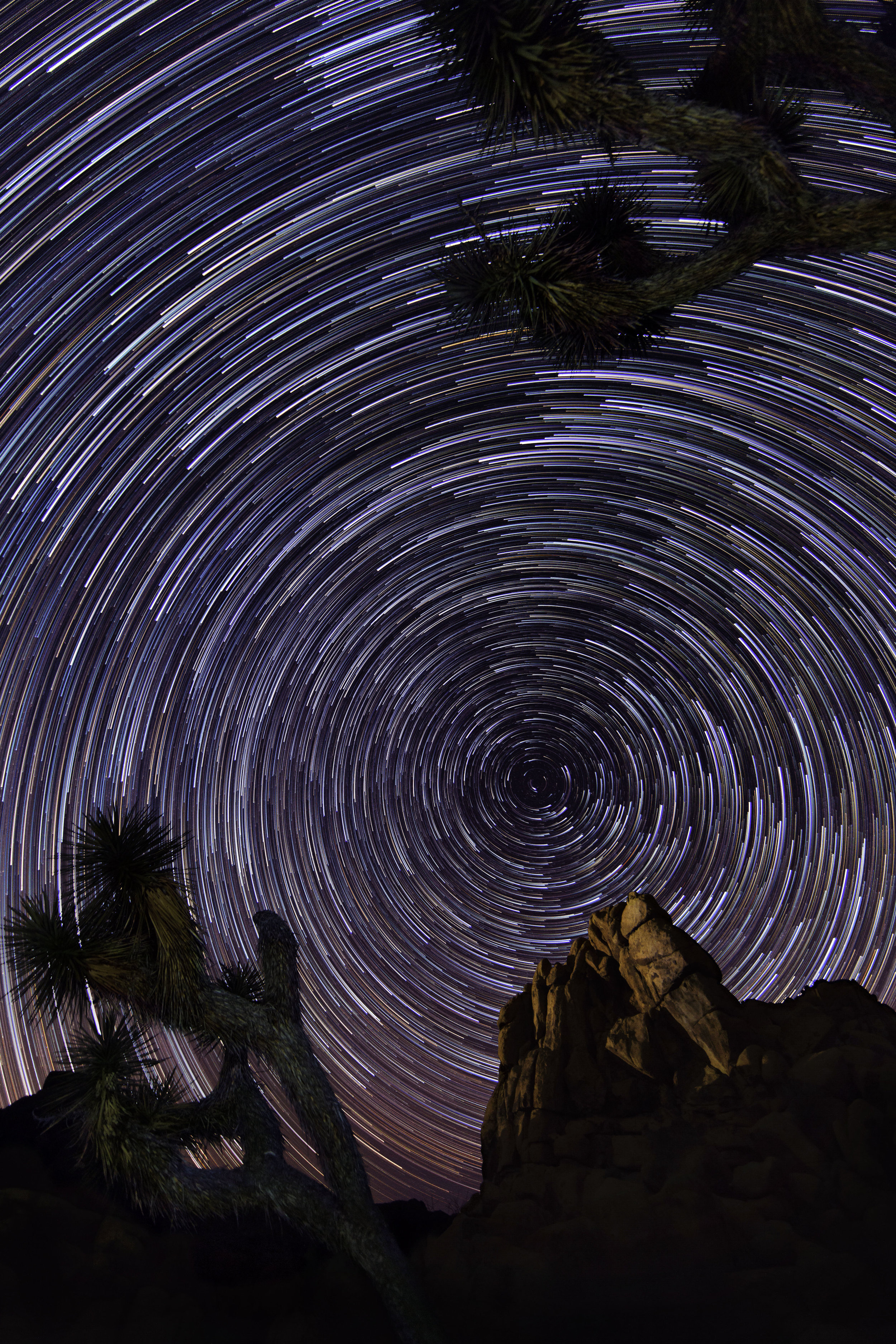 Star Trails at Joshua Tree National Park