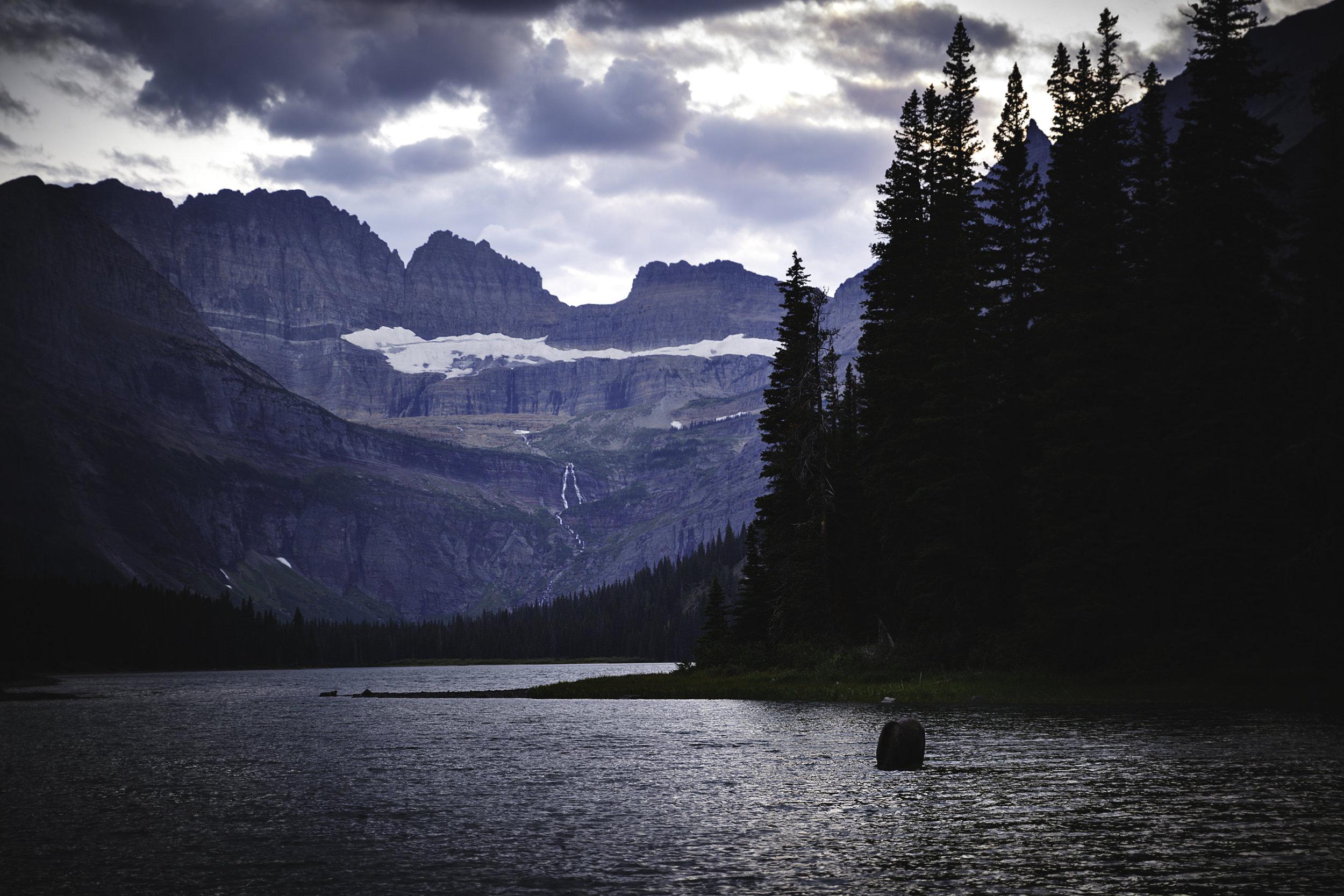 Glacier National Park - Moose