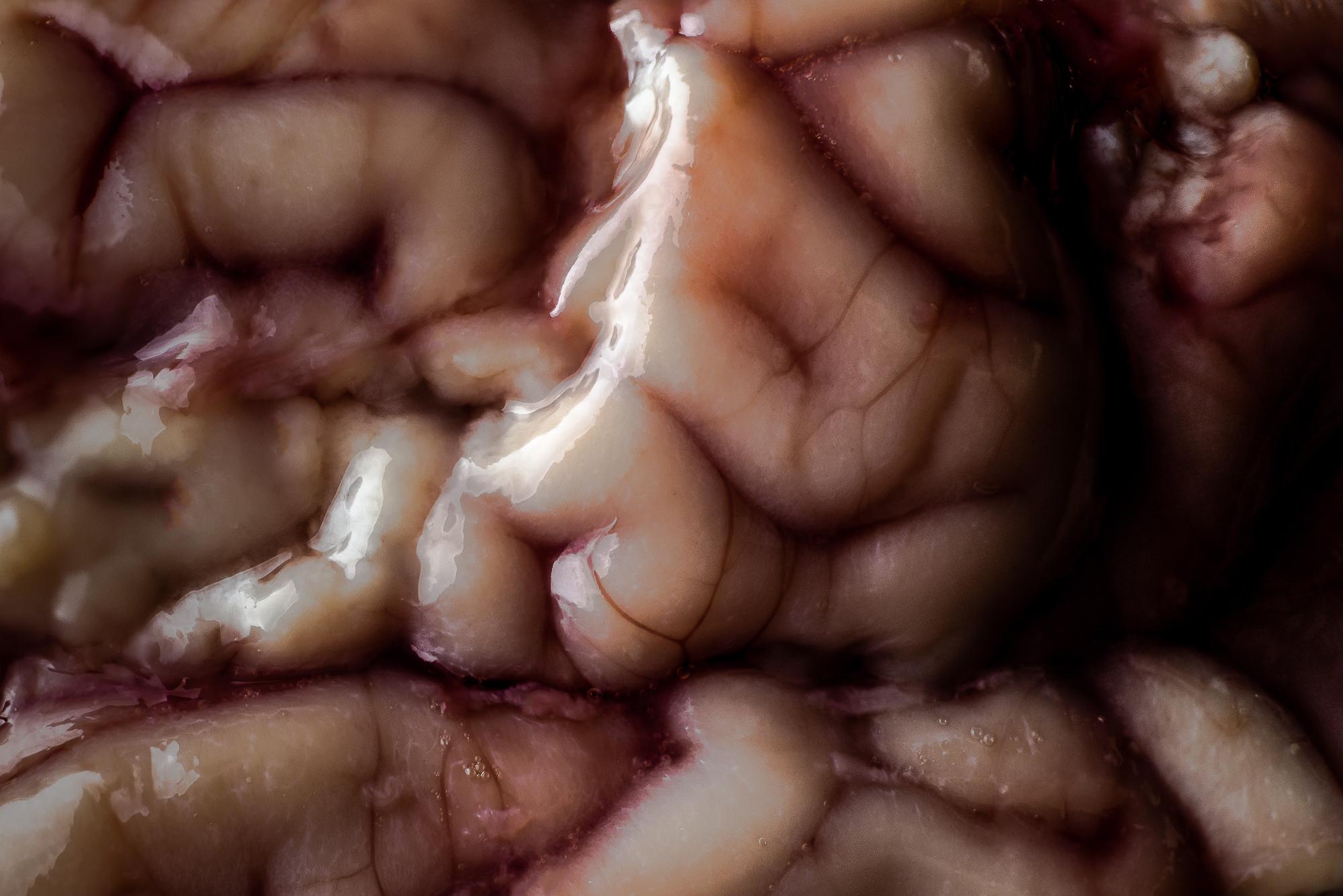 sheep-brain-macro.jpg