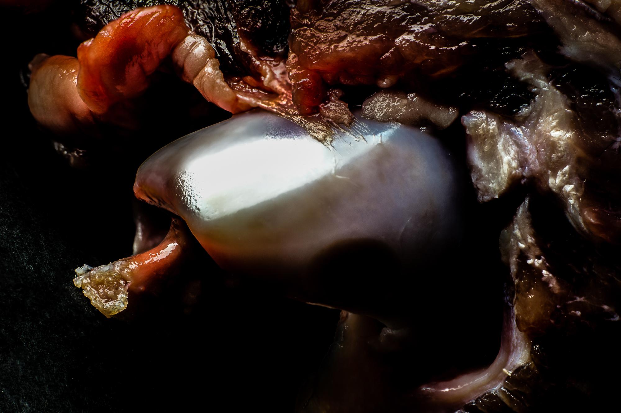 lamb-skull.jpg