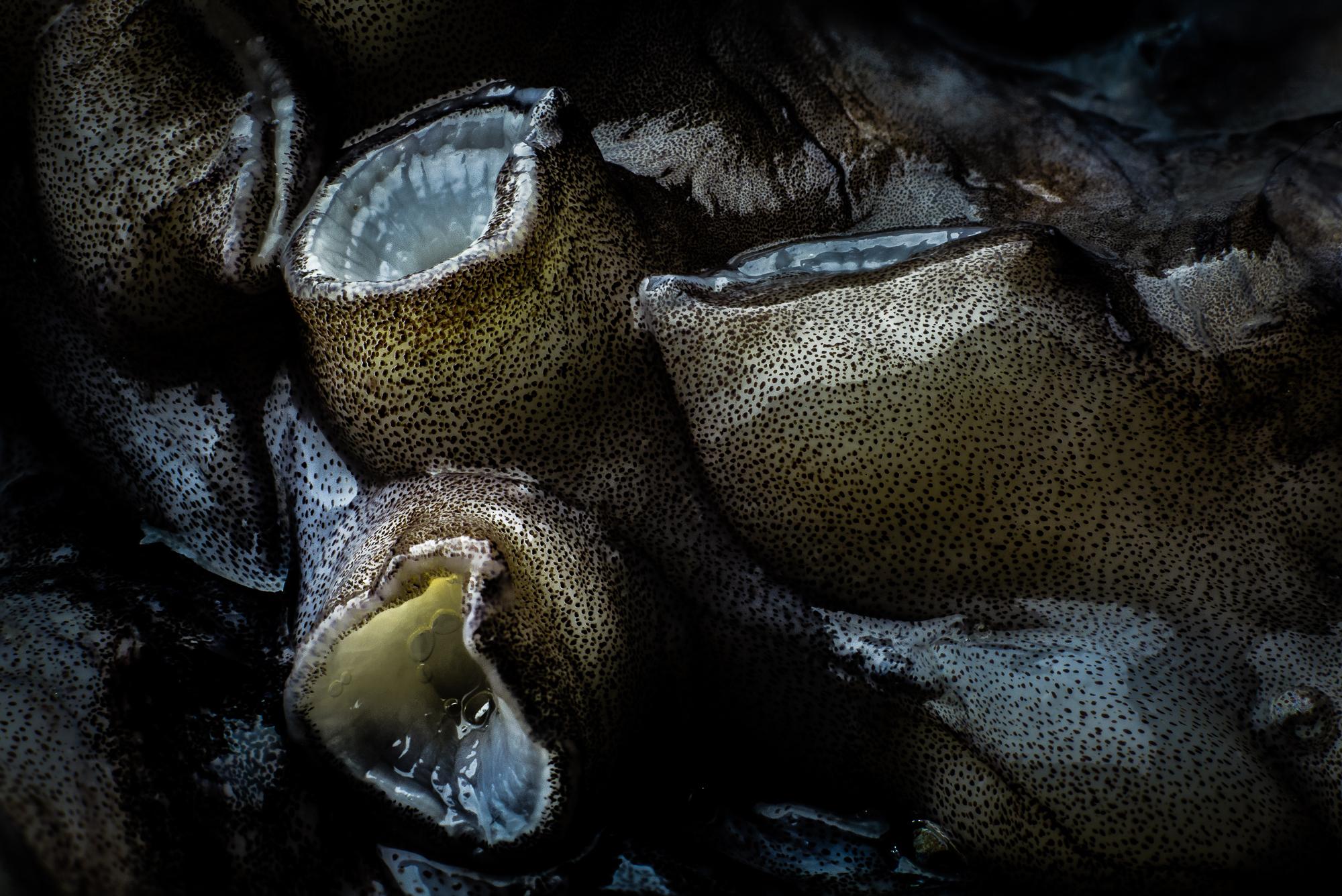 seafood-macro-1.jpg