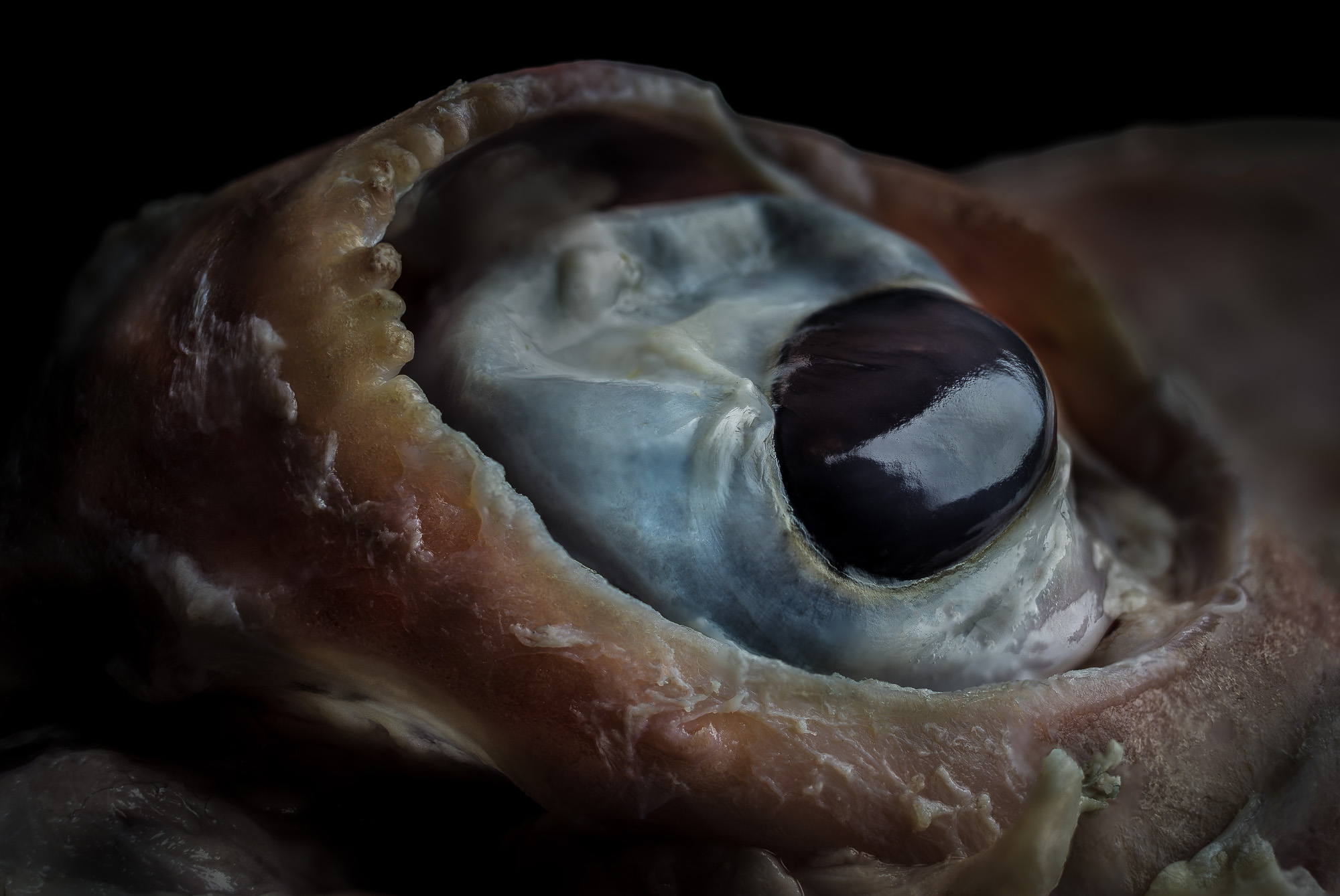 neal-auch-close-up-lamb-eye.jpg