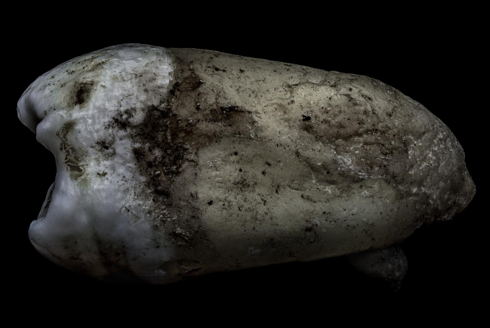 neal-auch-human-teeth-photographs-7.jpg